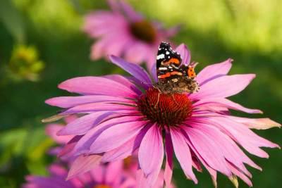 open tuinenweekend