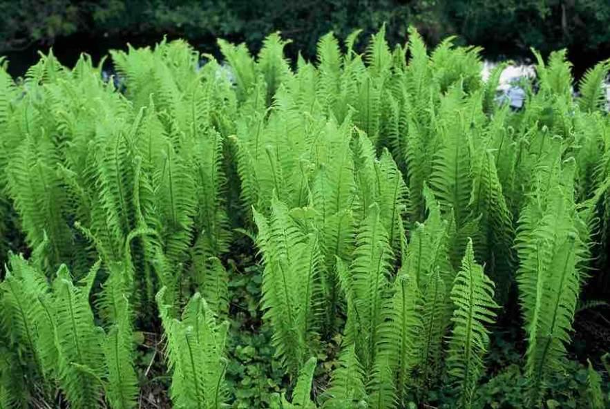 9 Schaduwplanten