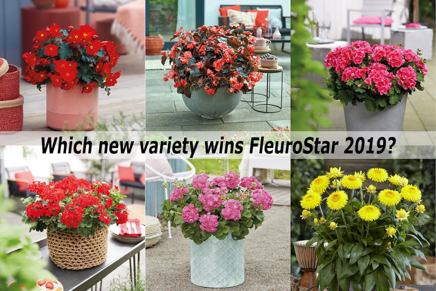 6 tuinplanten strijden om FleuroStar titel