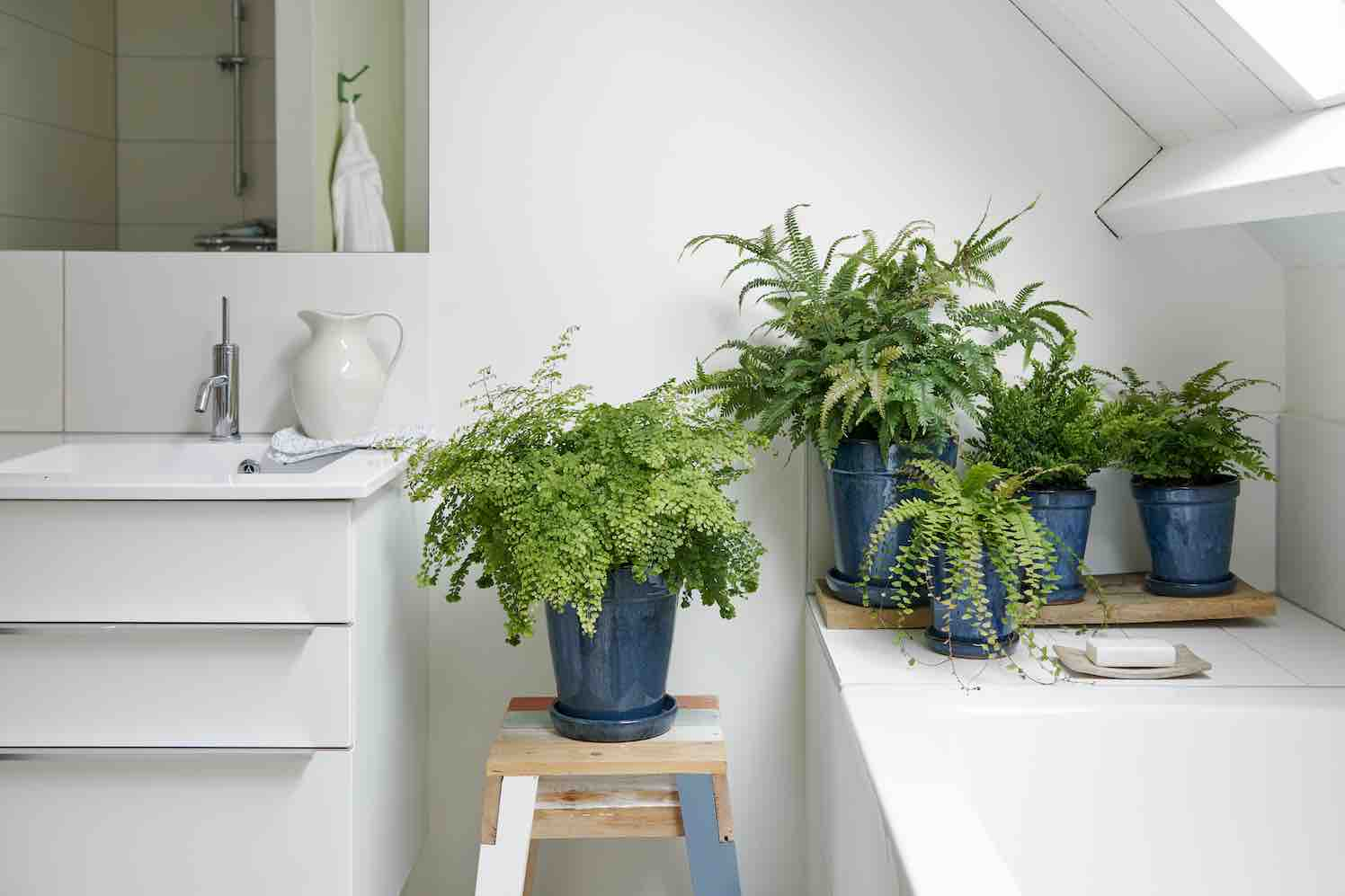 4 Badkamerplanten