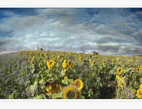 Nature Art Fair: nieuwe kunstbeurs rond bloemen en natuur