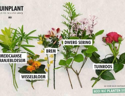 5 geurende tuinplanten van de maand mei