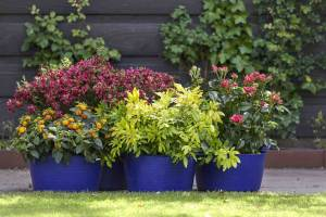 5 geurende tuinplanten