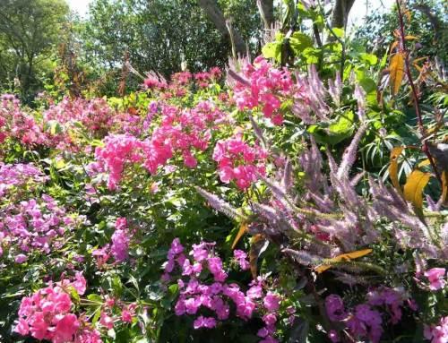 Nationale Tuinweek van 8 tot 16 juni