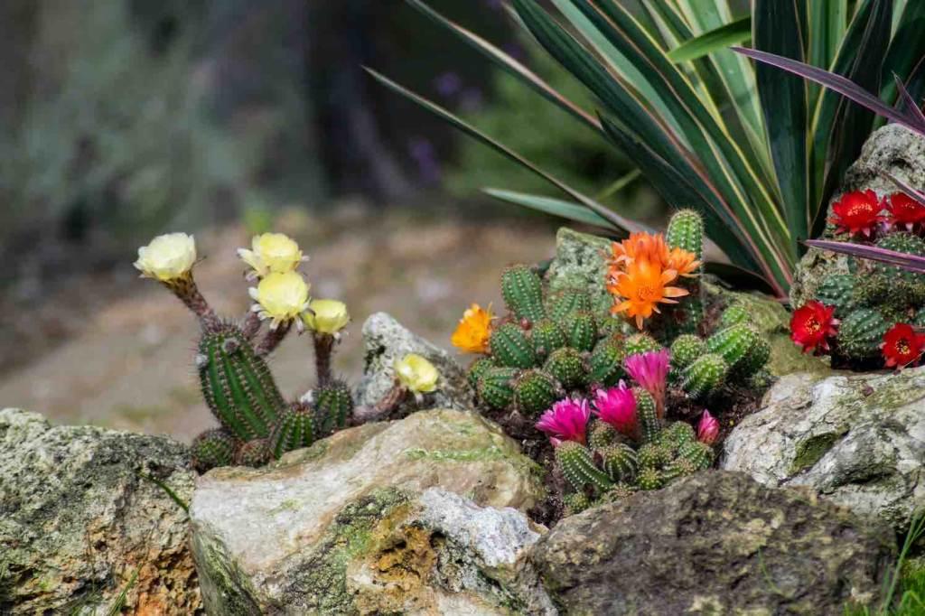 potplanten en perkplanten noviteiten