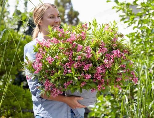 Prachtige noviteiten in potplanten en perkplanten