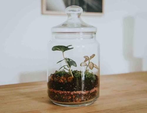 Maak je eigen ecosysteem in 6 stappen