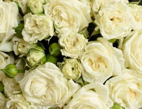 Huwelijksrozen van VOORN Spray Roses