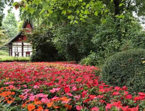 ARTIS showt bloemenzee met SunPatiens en Begonia