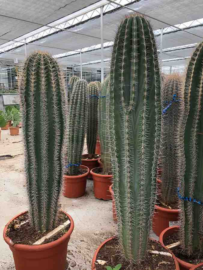 rm plants