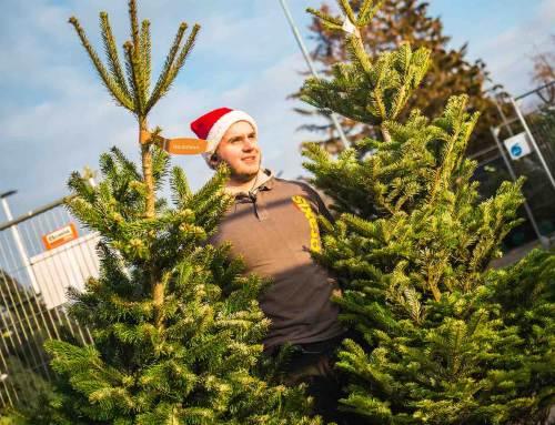 Droomboom-test helpt consument bij kiezen kerstboom