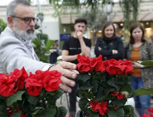Poinsettiaseizoen start met feestelijke sterrenlunch