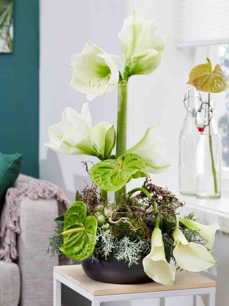amaryllis white sensation