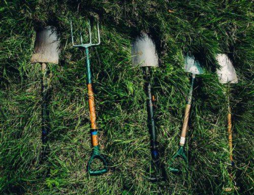 De juiste planten voor jouw tuin? De hovenier helpt!
