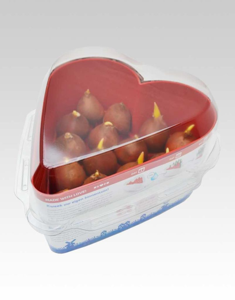 tulpen hart verpakking