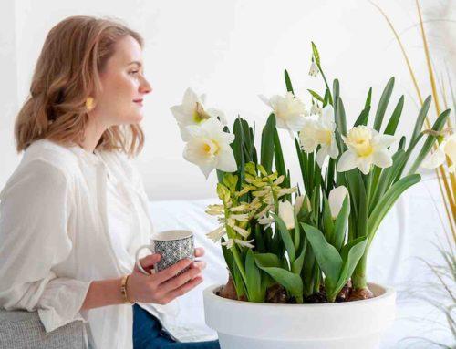 Bollen-op-potten voor een lenteachtige start