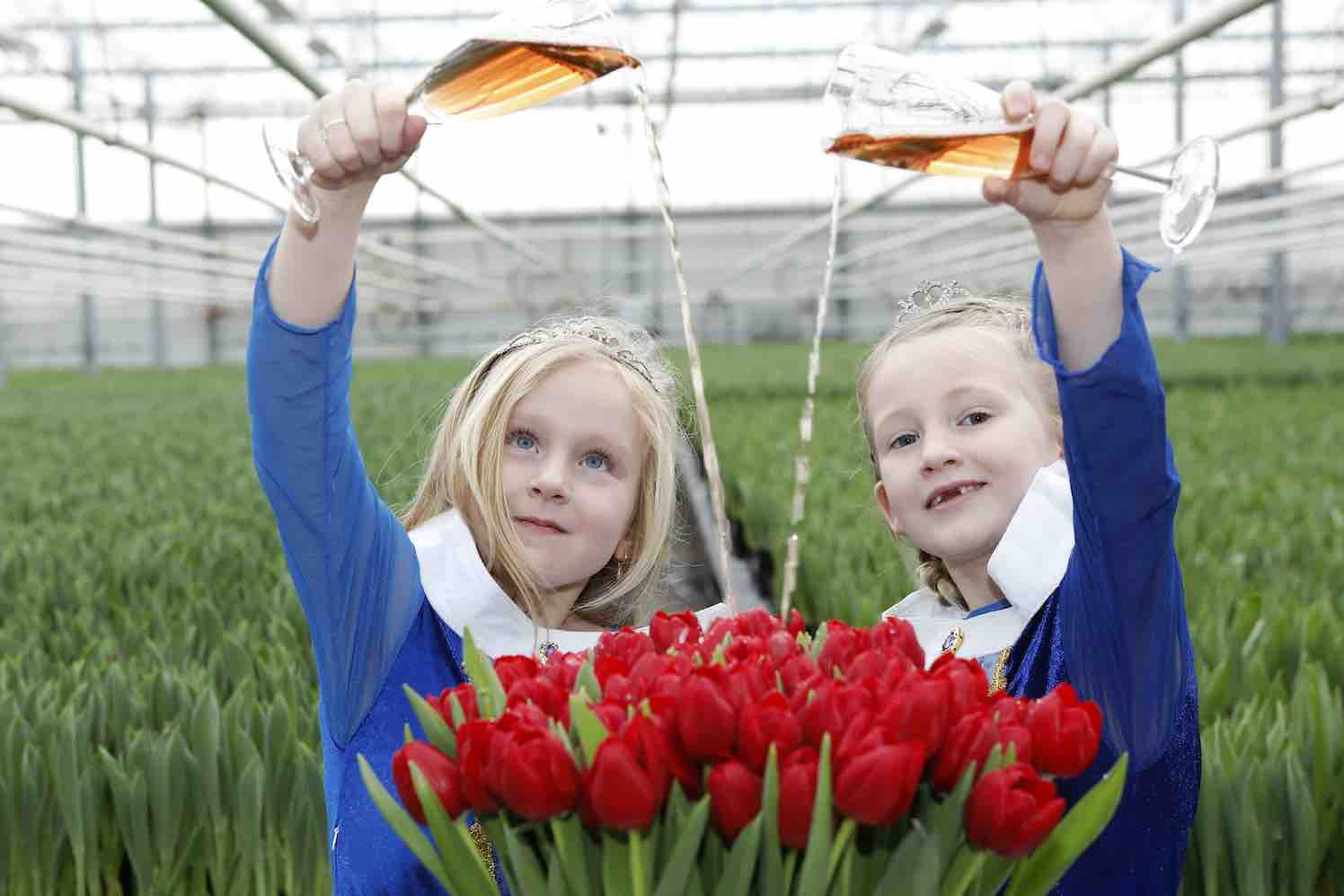 tulipa-make-a-wish