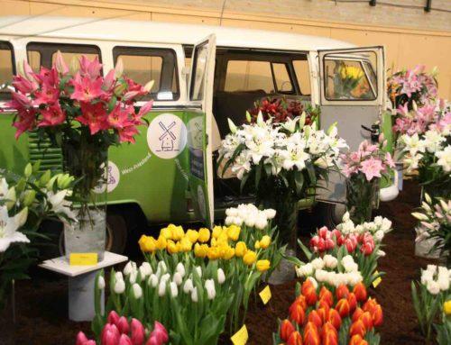 Westerkoggeflora in het teken van tulpen