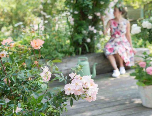 Nu rozen planten en in de zomer genieten