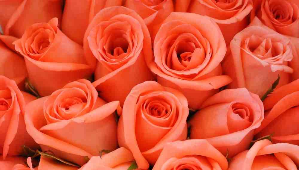 valentijn-kleurentest