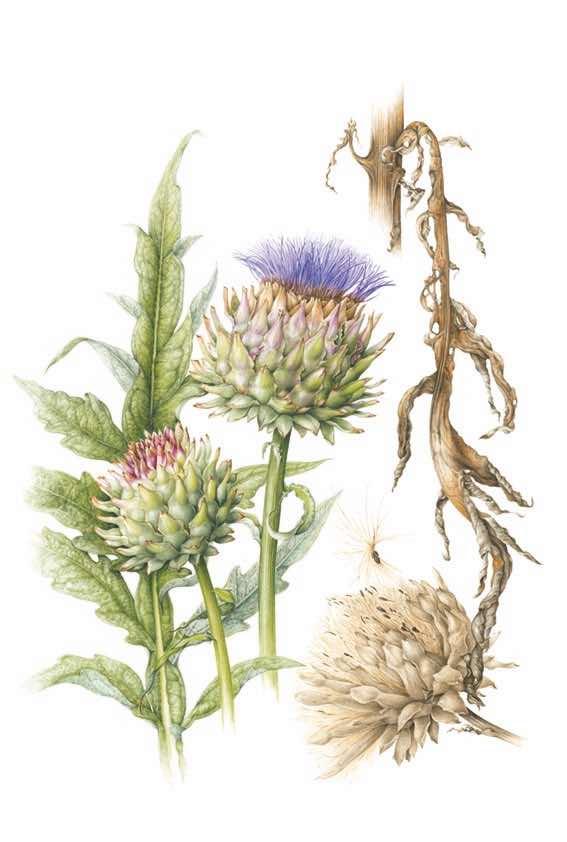 400 mayflower