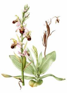 Bijzondere orchideeën