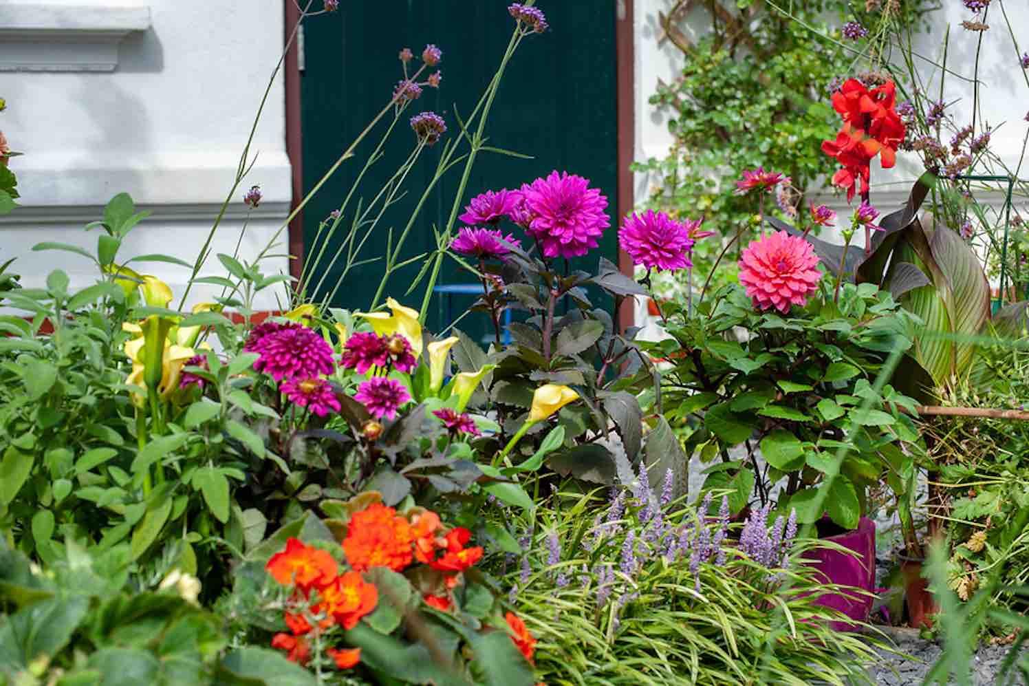 plantseizoen zomerbollen