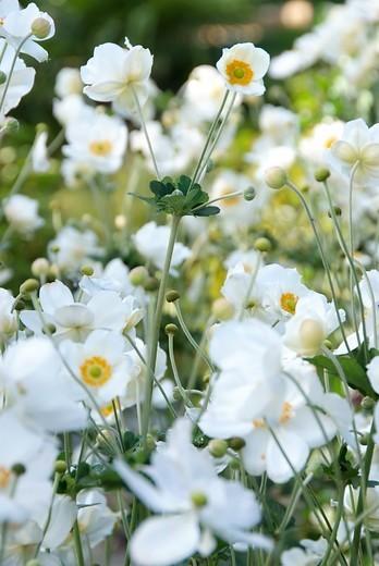 12 bloeiende vaste planten