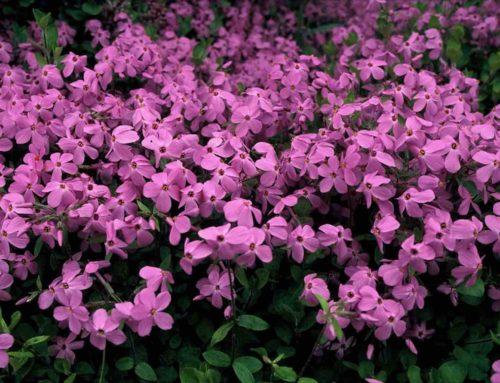 12 bloeiende vaste tuinplanten voor alle maanden kleur