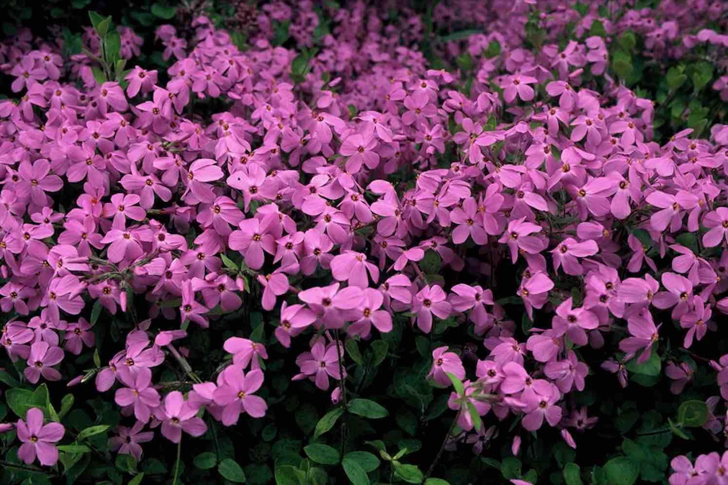 10 bloeiende vaste tuinplanten