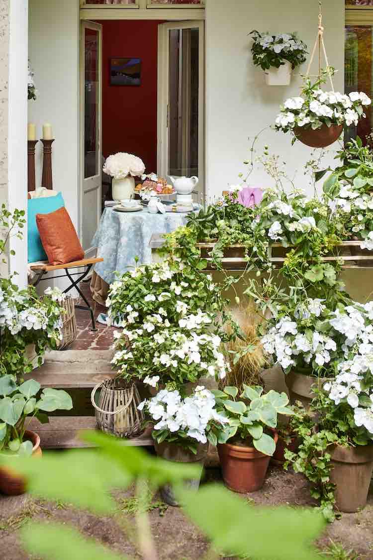 balkon- en terrashortensia