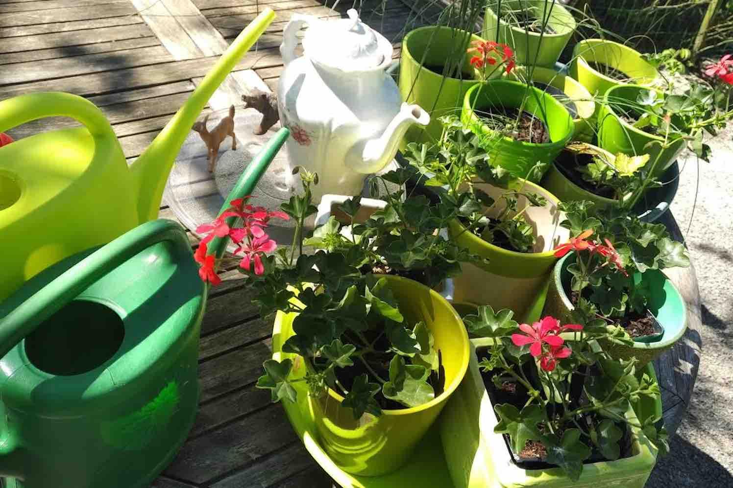 Tuinieren in tijden van corona