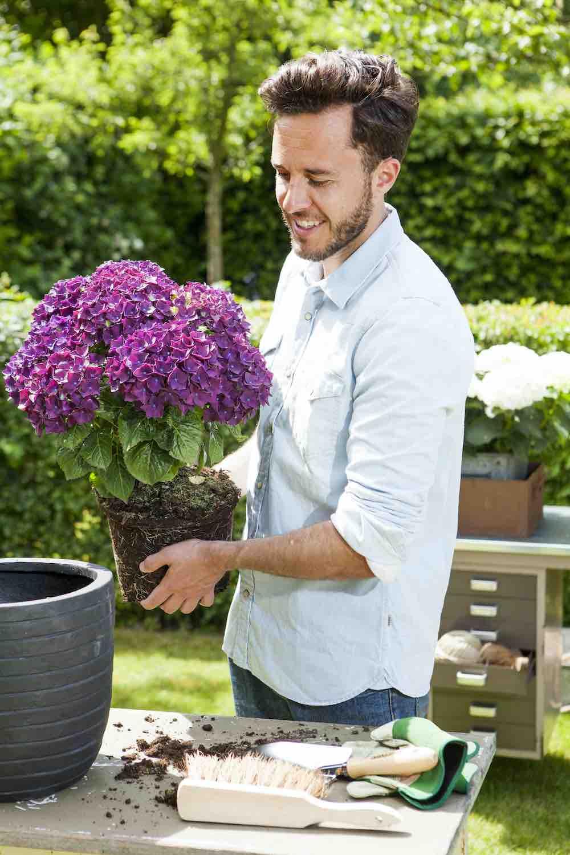 hortensiabloemen