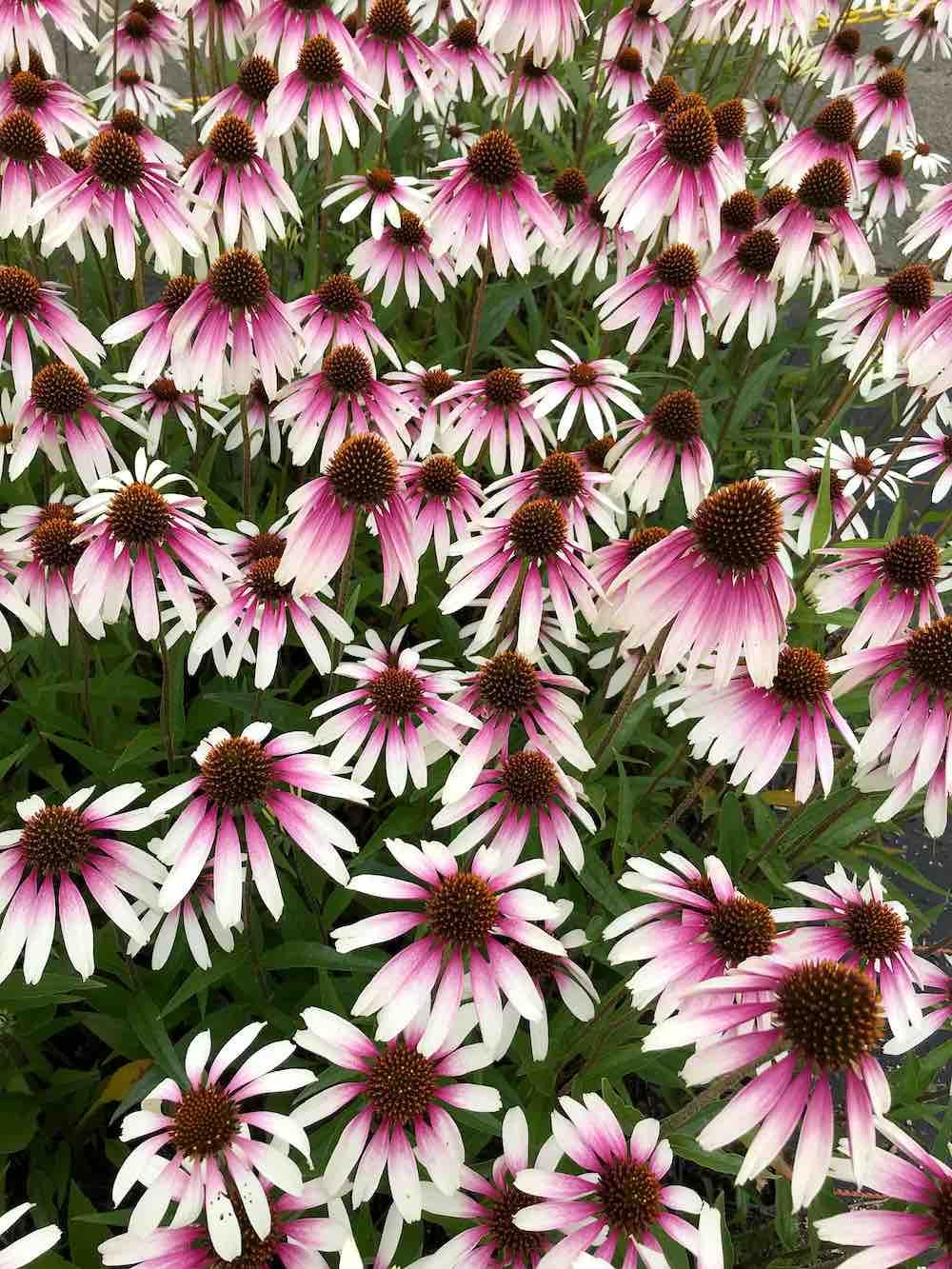 8 bijvriendelijke planten