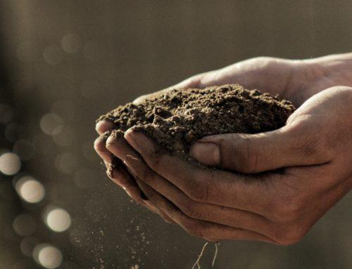 Romke van de Kaa, De onderwereld van de tuin