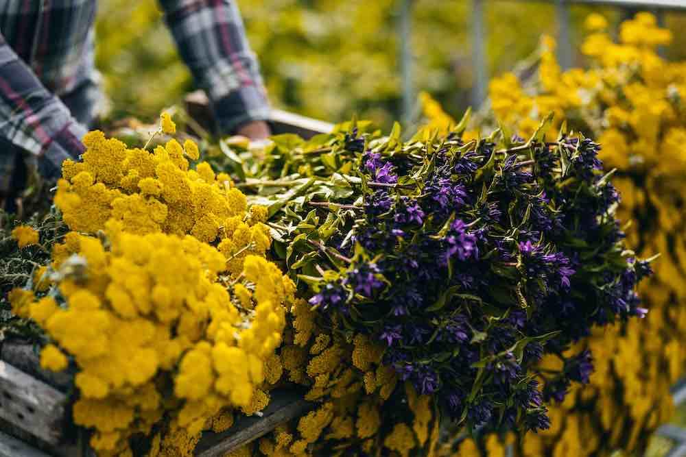 biologische bloemen