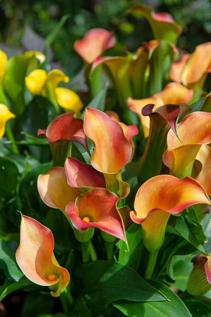 woonplant