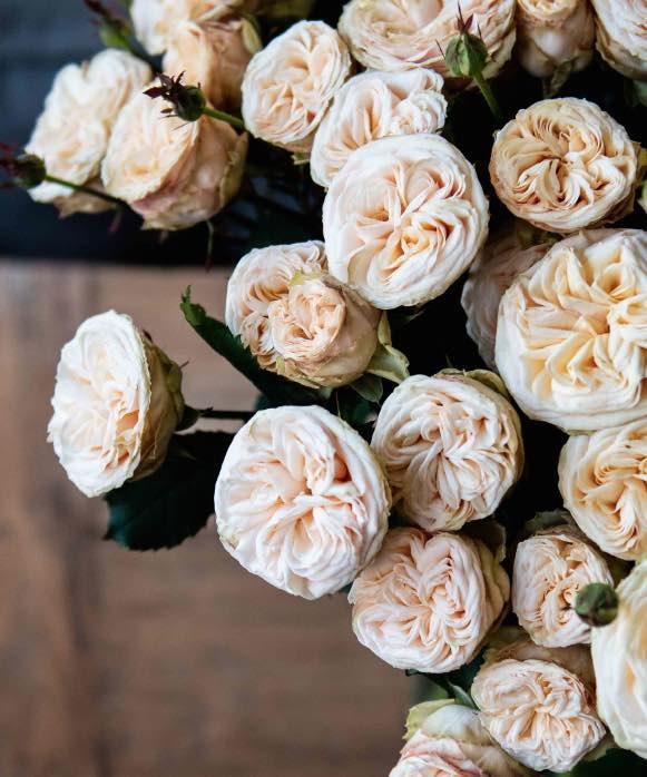 voorn spray roses
