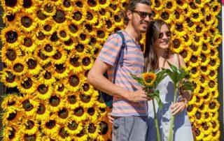 zomer zonnebloemen