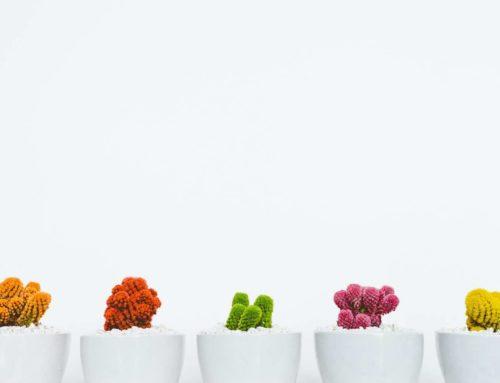 Cactus, zorgeloos groen in de huiskamer