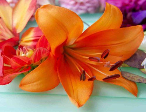 6 tips om zo lang mogelijk van je lelies te genieten
