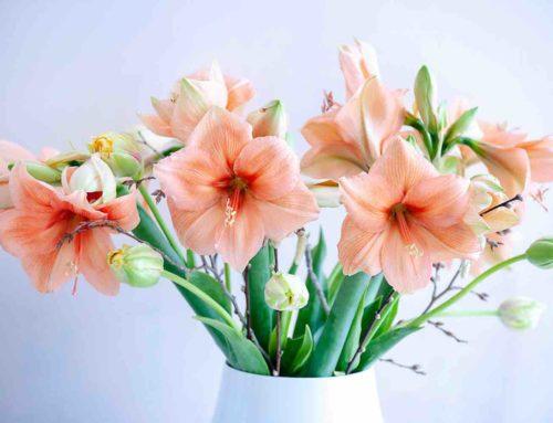 Haal de zomer binnen met zomerbloemen