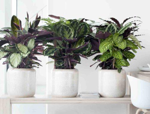 Deze kamerplanten gaan jouw donkere hoekjes opfleuren