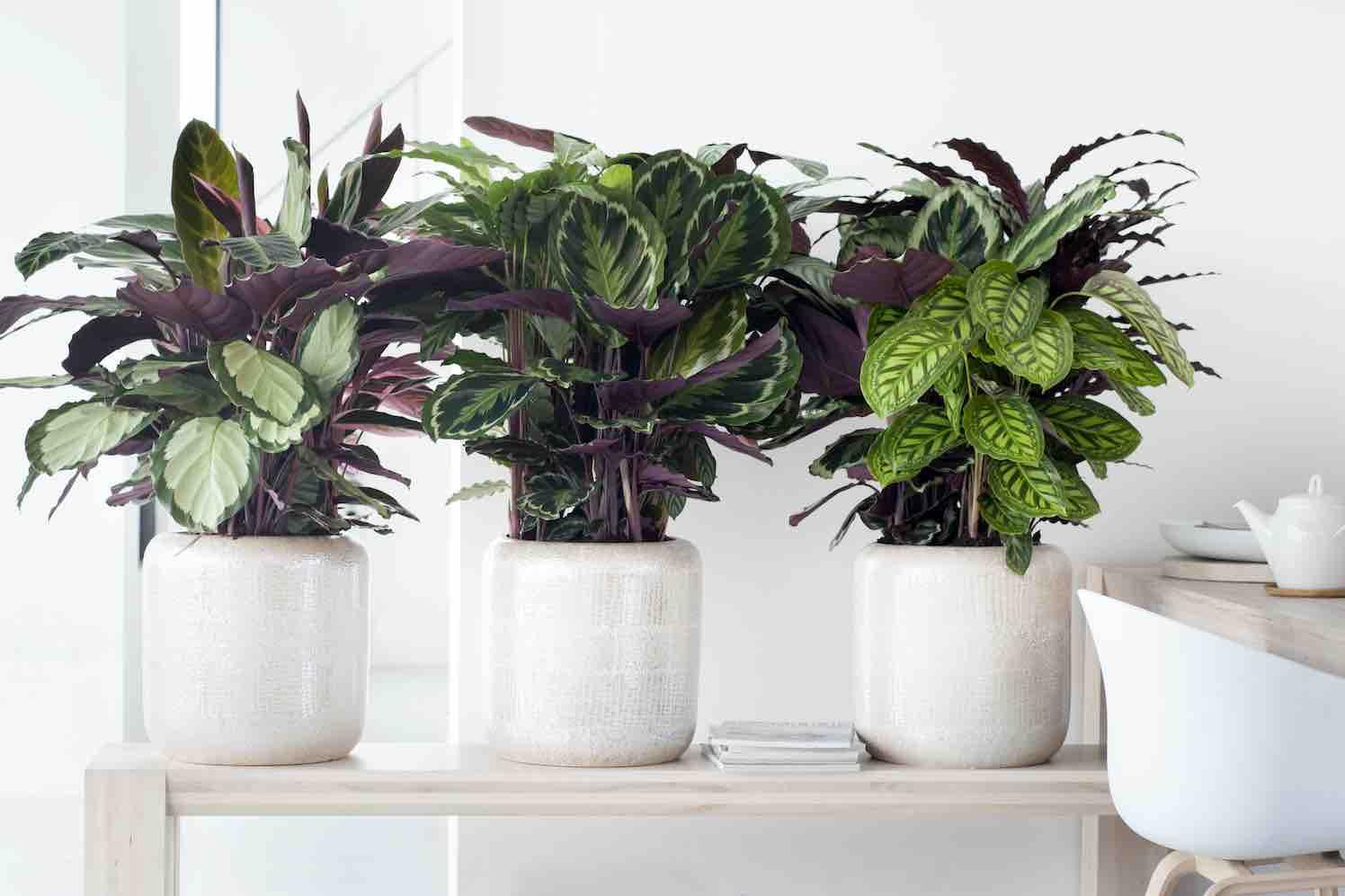 kamerplanten voor de donkere hoekjes