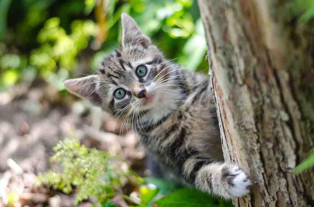internationale kattendag