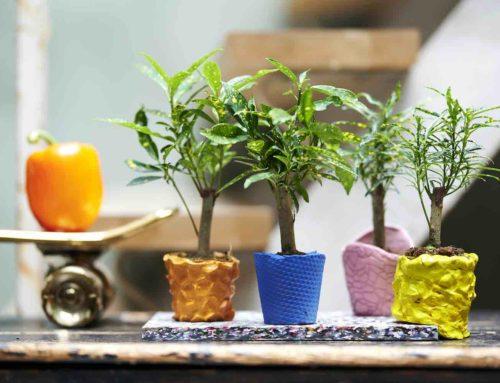 5 redenen om voor woonplant Croton te kiezen