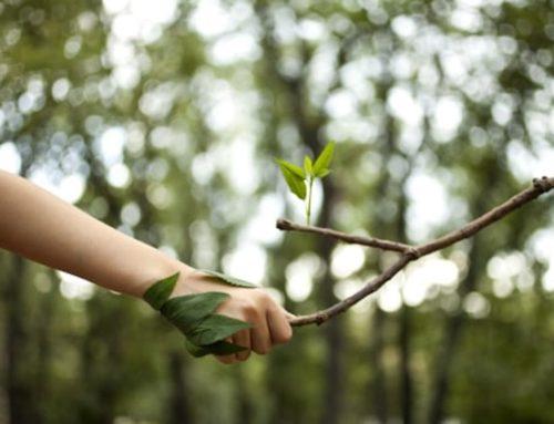 Met EcoMatcher bomen planten over de hele wereld