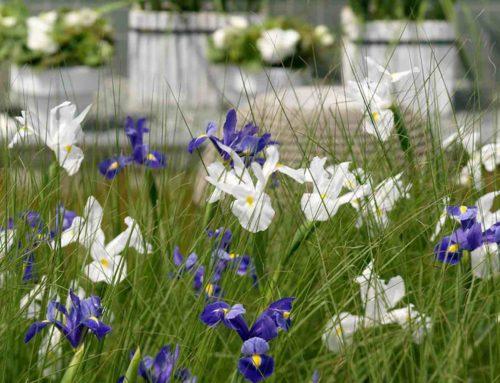 Iris de mythische boodschapper onder de bloemen