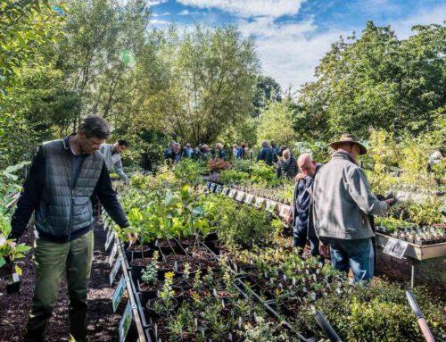 Lowgardens Nurseries in Wernhout