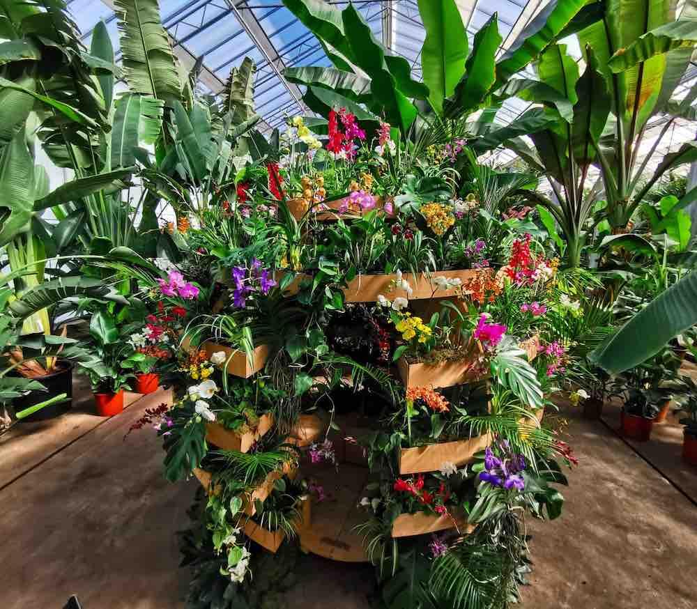 internationale dag orchidee
